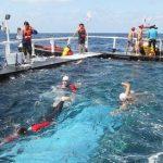 水泳リレーで竹島に到着した方法が想像の斜め上な件